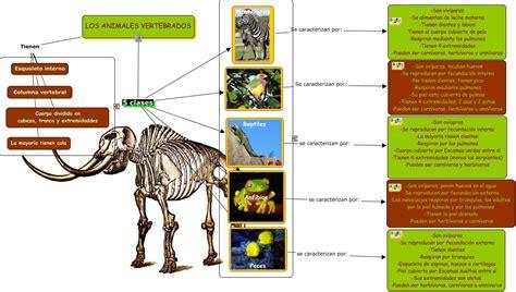 berita hankam 6 13 10 6 20 10 animales vertebrados