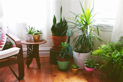 foxtail moss plant grow bringing outdoor plants inside for the winter