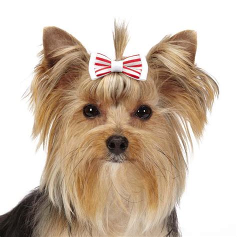 peppermint for dogs peppermint barrettes at baxterboo