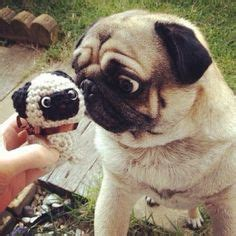 best chew toys for pugs 1000 images about pugs and toys on pug baby pugs and toys