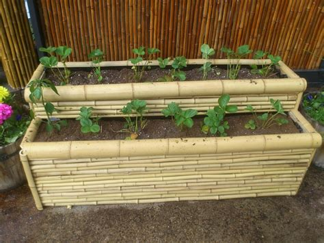Raised Strawberry Planters by 1000 Images About Bamboo Outside On White