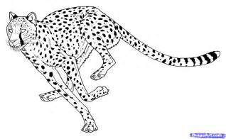 Running Cheetah Outline by How To Draw Cheetahs Cheetah Cat Step By Step Safari Animals Animals Free Drawing