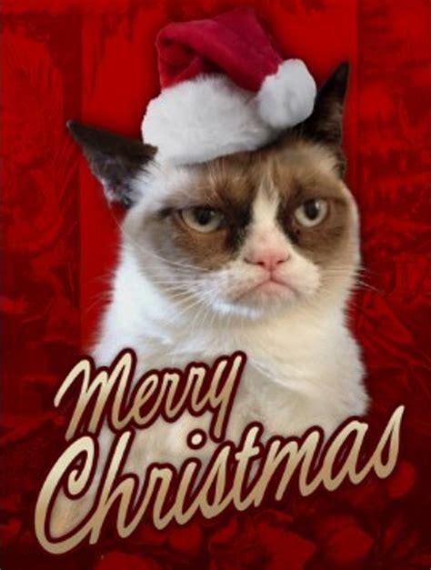 Merry Christmas Cat Meme - merry christmas stephanie pomfrett