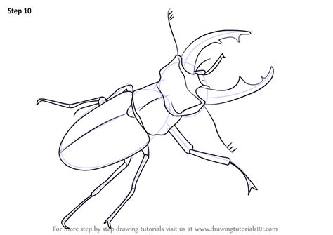 coloring pages birds and insects coloring page of birds and insects images download