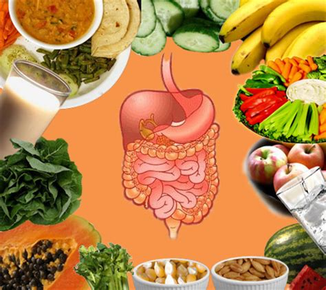 gastrointestinal food the digestive system introduction