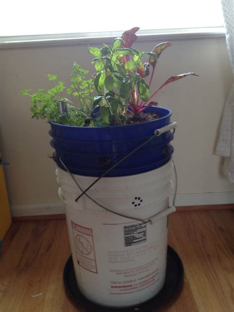 Self Watering 5 Gallon Planter by 5 Gallon Planter Food Is Free Project