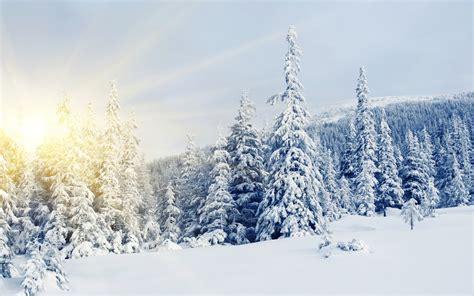 imagenes de paisajes invernales bosques de abetos en invierno paisajes naturales fotos e