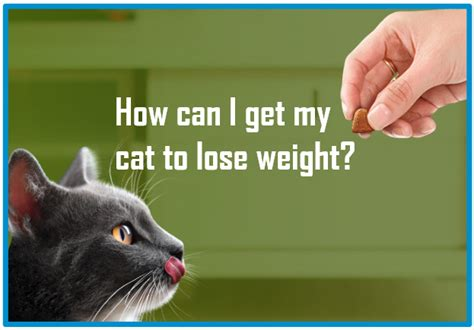 can a get a cat how can i get my cat to lose weight