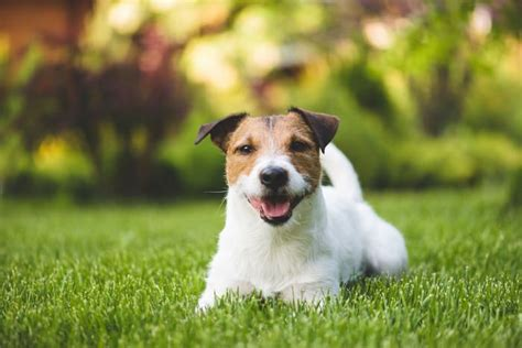how to keep dogs lawn how to keep your lawn green with dogs veterinary clinic pet stockton