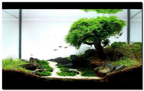 aquascape on aquascaping aquarium and underwater