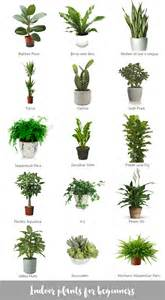 best inside plants indoor plants for beginners
