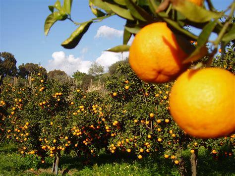 giardino delle arance tour su agrigento