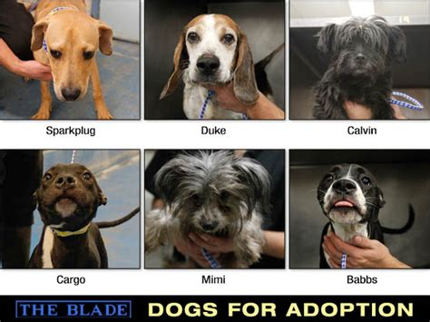 puppies for adoption toledo ohio lucas county dogs for adoption 10 23 the blade
