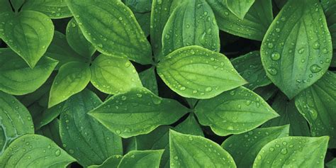 things your plant leaves are trying to tell you plant leaf conditions