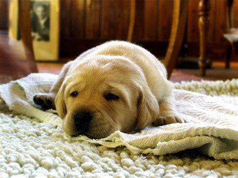 how to keep house smelling fresh with dogs odour issues with pets how to keep your house fresh
