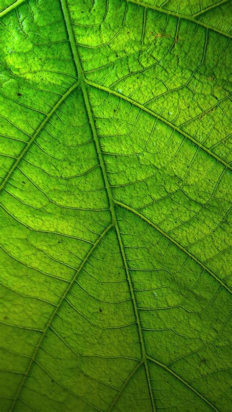 green leaf wallpaper iphone android desktop backgrounds