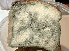 What To Do If Your Kombucha Has Mold | Kombucha Home Healthy Kombucha Scoby