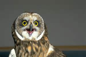 Owl Bed Set Animals Picture 11 15 Animals Image