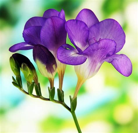 different types of purple 34 different types of purple flowers for your garden