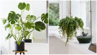 Indoor Flowering Plants No Sunlight 4 Plants That Don T Need Sunlight Rl