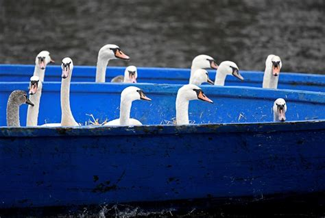 swan quarter public boat r the week in pictures nov 15 22