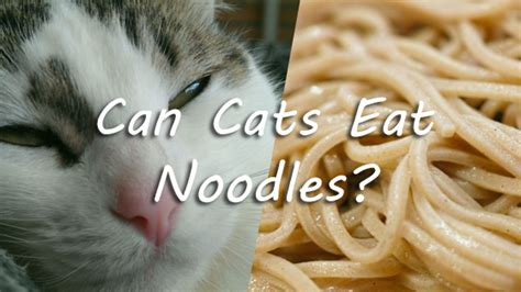 can dogs eat noodles can cats eat noodles pet consider