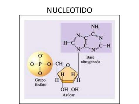 cadena de adn de 15 nucleotidos adn y arn finalmod