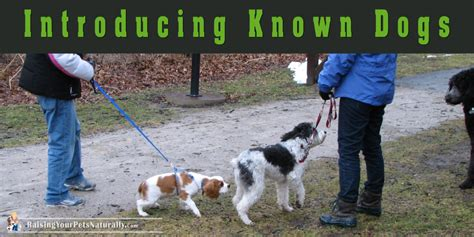 puppy and socialization puppy socialization how to introducing your puppy to familiar dogs and other puppies