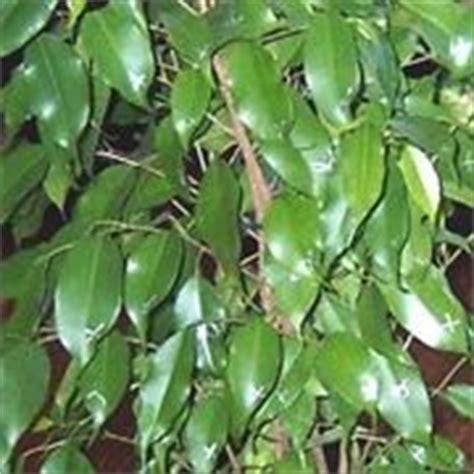 piante d appartamento resistenti piante da appartamento resistenti piante appartamento