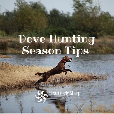 how to a to dove hunt dove tips to enjoy the season