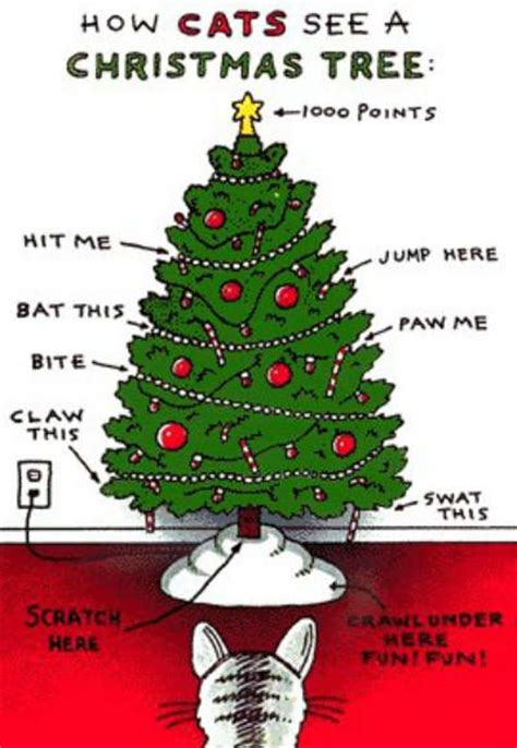 how cats see a christmas tree neatorama
