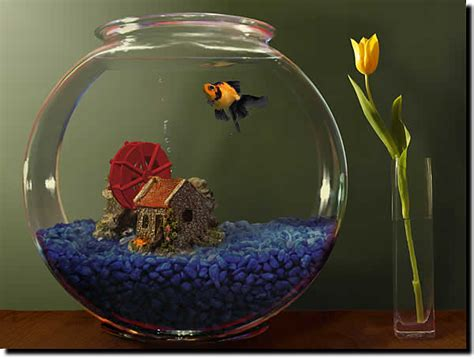 fish tank in bedroom feng shui using a feng shui fish tank to attract wealth and