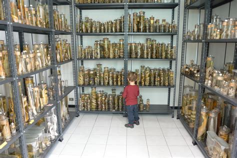 univerista di pavia 14 febbraio apertura museo di storia naturale dell