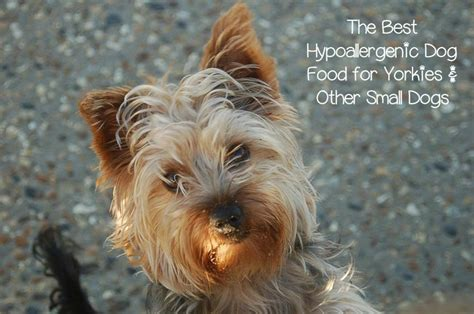 yorkie hypoallergenic best hypoallergenic food for yorkies