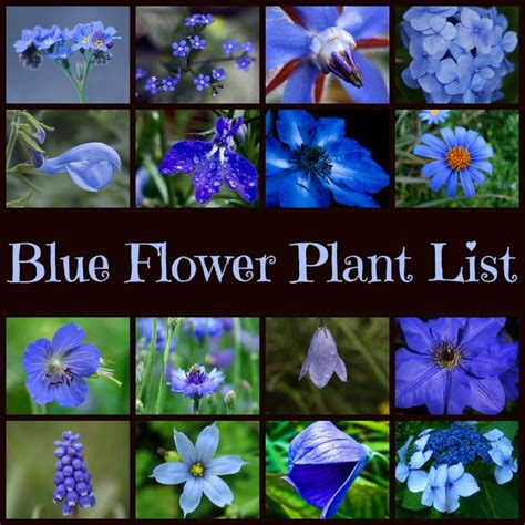 image gallery names of blue flowers