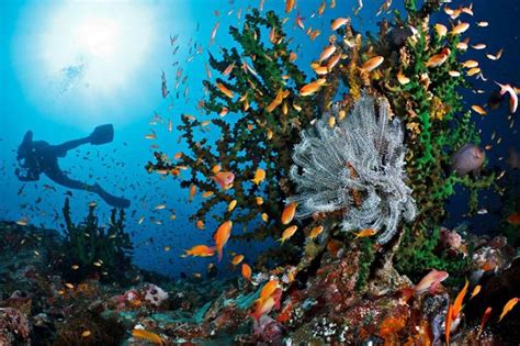 High Rubiah by Indonesia S Best Diving Spots What S New Jakarta