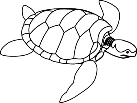 Turtle Outline Vector by Turtle Outline Clip At Clker Vector Clip Royalty Free Domain