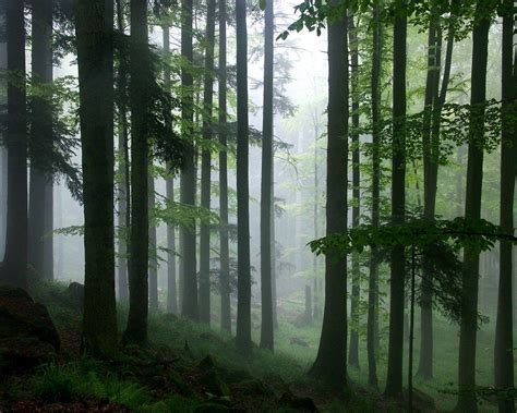 wallpaper for walls forest tropical rainforest wallpapers wallpaper cave
