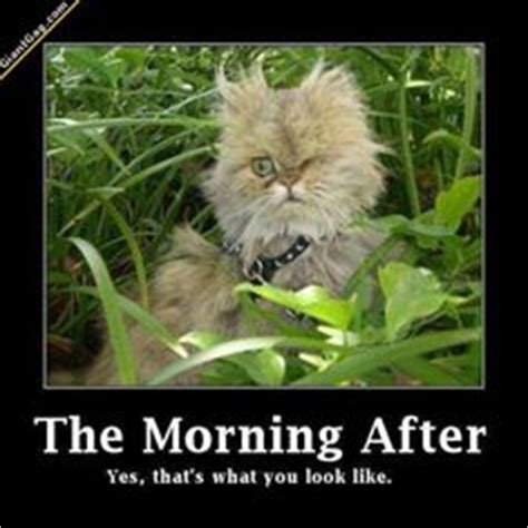The Morning After Meme - 1000 images about a liltoo much drinking on pinterest kitty cats and drunk cat