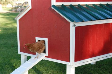 chicken coop plans home depot 4 chicken emerges from a