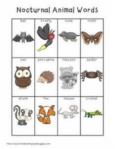 nocturnal animals on pinterest bats stellaluna and animals