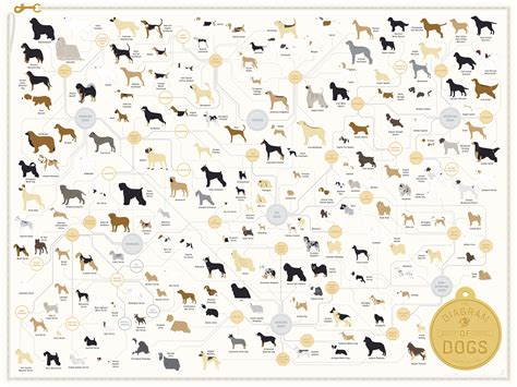 Wonderful diagram of dogs featuring 181 different dog breeds