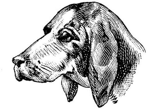imagenes animadas en blanco y negro perros en blanco y negro perros gifs animados