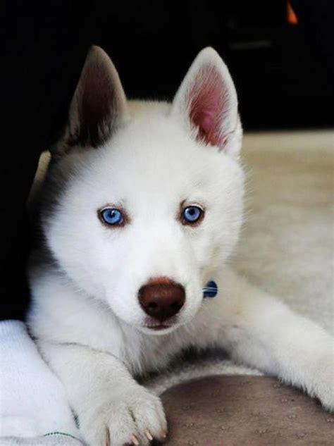 beautiful puppy dogs beautiful dogs photo 33355289 fanpop