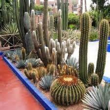 Bibit Tanaman Hias Cactus Dan Succulent Mammillaria Elongata taman tanaman kaktus bongkar pasang tanaman bunga hias