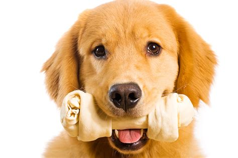 how to stop puppy from chewing everything 10 ways to stop your from chewing everything eblogfa