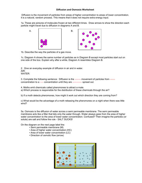 Osmosis And Diffusion Worksheet by Uncategorized Diffusion Worksheet Klimttreeoflife Resume
