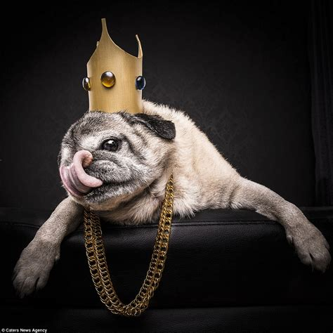 pugs the caign adam jackman transforms pugs into cube and 2pac lookalikes daily mail
