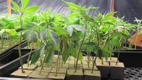 Solano County Warrant Search Marijuana Grow Valued At 14 5 Million Discovered In Benicia Warehouse Fox40