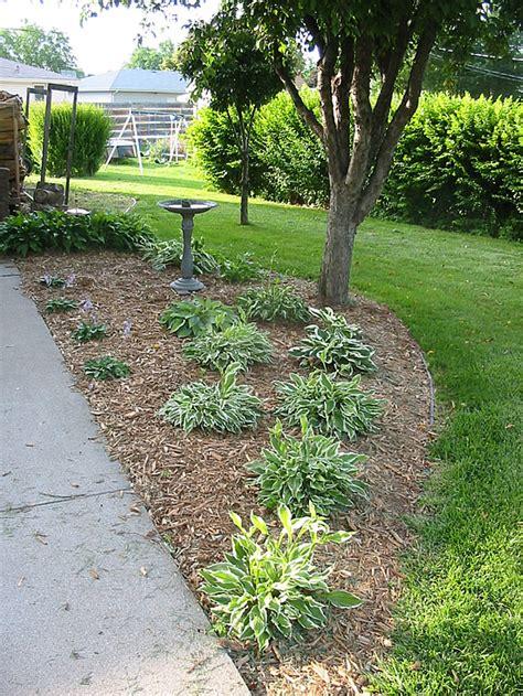 hosta flower beds hostas